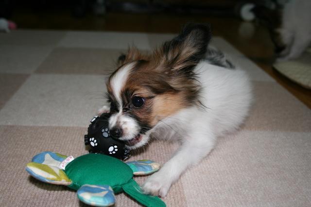 おもちゃがいっぱい・・・